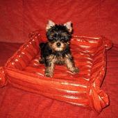 Мягкий лежак для собачки