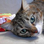 Магазин Любовь Хаусы для котяусов