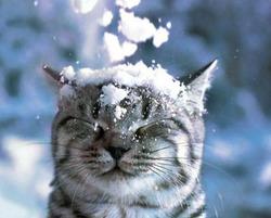 """Акция """"Подарок к зиме"""""""
