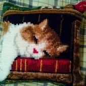 Спящий кот на книжной полке