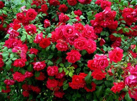 """Домашние валеночки """"Розы"""" ручной работы на заказ"""