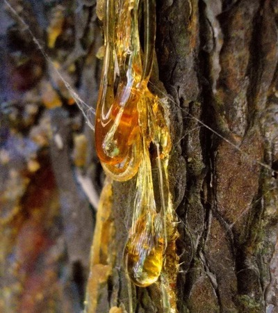 Живица кедровая (сырец) ручной работы на заказ