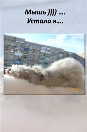 Мастер-класс по ленивой мышке ) - описание вязания, вязаная мышь ручной работы на заказ