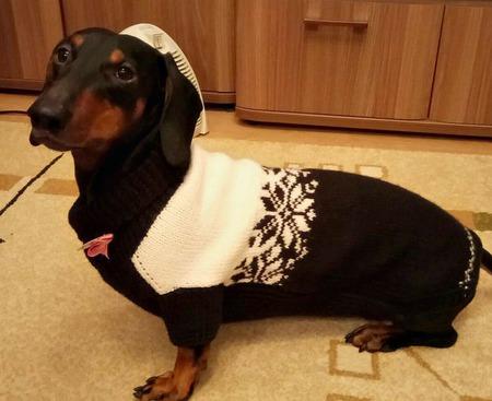 """Свитер """"Благородный"""" для собаки ручной работы на заказ"""