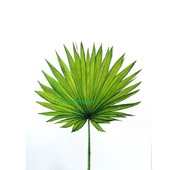 Картина Лист пальмы ботаническая акварель тропический стиль зеленый