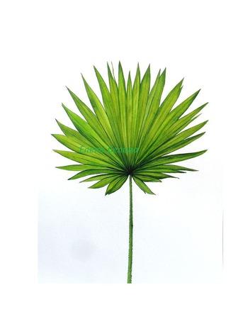 Картина Лист пальмы ботаническая акварель тропический стиль зеленый ручной работы на заказ