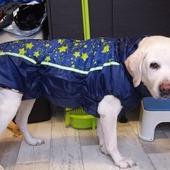Курточки для собак