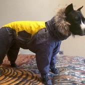 Дождевик на собаку