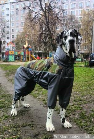 Дождевик на собаку ручной работы на заказ