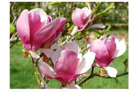 Юбка-пачка или tutu Магнолия в цвету ручной работы на заказ