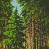 Схема вышивки Хвойный лес
