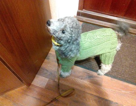 Вязаная одежда для собак и кошек ручной работы на заказ