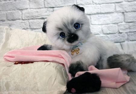 Котик сиамчик Тишка ручной работы на заказ
