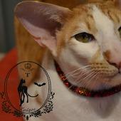 """Ошейник из бисера """" Красный питон """" для кошки или собаки"""