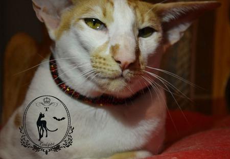 """Ошейник из бисера """" Красный питон """" для кошки или собаки ручной работы на заказ"""