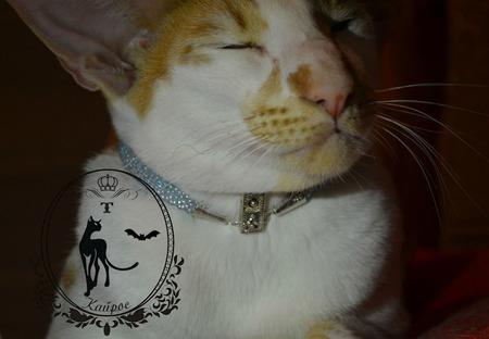 Ошейник для кошки . ручной работы на заказ