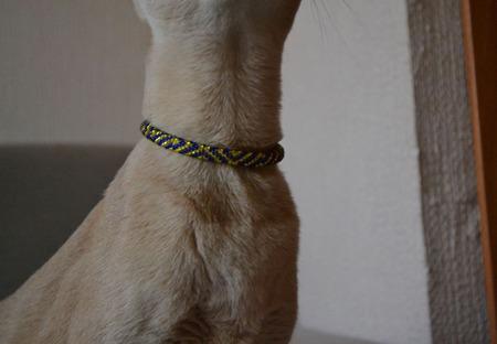 Ошейник  ФАРАОН для кошки или собаки . Из бисера ручной работы на заказ