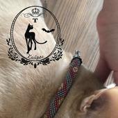 Ошейник для кошки .