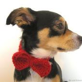 фото: Для домашних животных (для домашних животных)