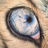 "Рисунок ""Глаз хаски"""