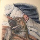 фото: Картины и панно (лысая собака)