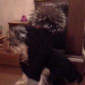 Свитер с капюшоном для щенка йорика