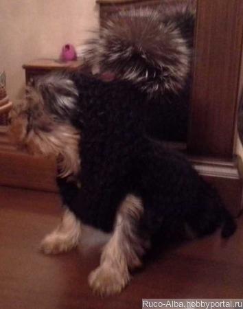Свитер с капюшоном для щенка йорика ручной работы на заказ