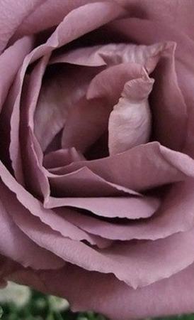 Шаль Холден Кашемировая роза с бусинами ручной работы на заказ