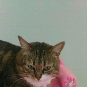Диванчик для кошки Розовые искры