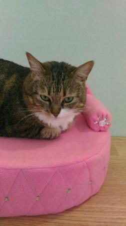 Диванчик для кошки Розовые искры ручной работы на заказ