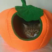 фото: Для домашних животных оранжевого цвета