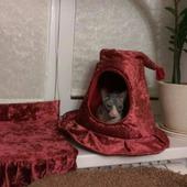 Домик для кошки Шляпа.