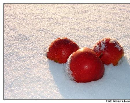 """Снуд-шарф """"Яблоки на снегу"""" (полушерсть) ручной работы на заказ"""
