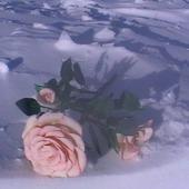 "Роза из фоамирана ""Утро"""