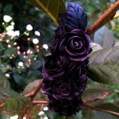 Заколка для волос Черные розы
