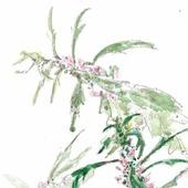 """Акварель """"Пустырник"""" картина, акварельные цветы"""