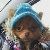 Шапочка для собаки