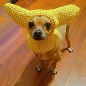 Шапочка с ушками для собаки
