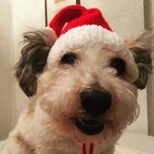 фото: Для домашних животных (шапка для собаки)