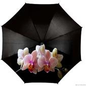 """Зонт женский с рисунком """"Розовые орхидеи"""""""