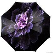 фото: Зонты