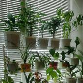 """Стеллаж для растений и рассады """"Мечта Цветомана"""""""