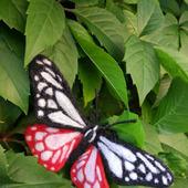 фото: Украшения (брошка бабочка)