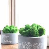 Интерьерные вазы из бетона с стабилизированным мхом