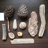 Морские находки набор 4 дерево шишки, ракушки и т.п