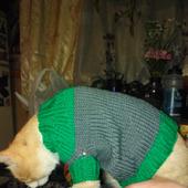 Свитер для кота