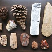 Морские находки дерево шишки и что-то непонятное набор Лот 10