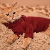 Свитер на кота