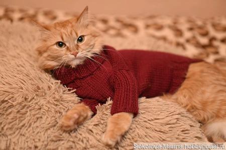 Свитер на кота ручной работы на заказ