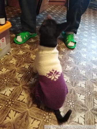 Вязаный комбинезон на собаку ручной работы на заказ